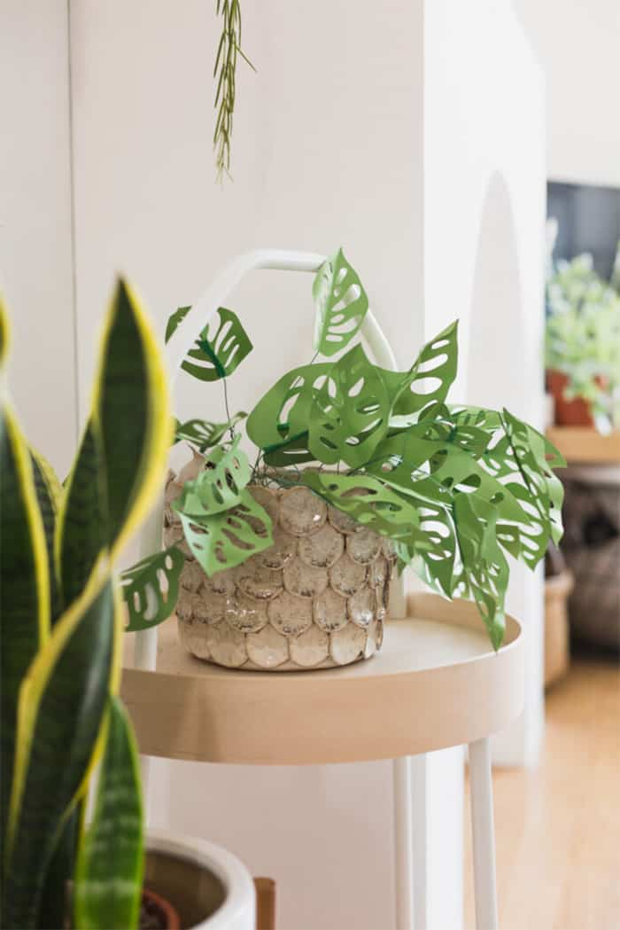 DIY paper monkey mask plant