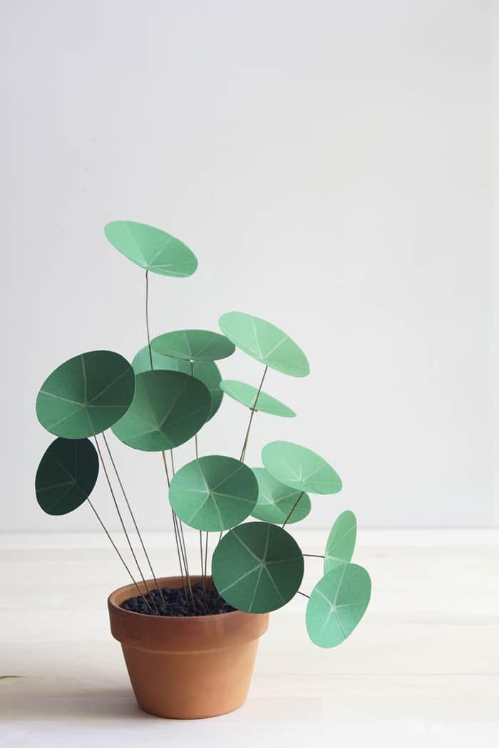 DIY pilea plant