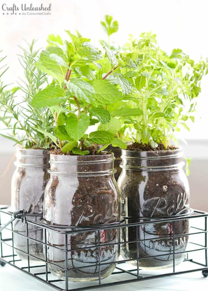 herbs garden in mason jars