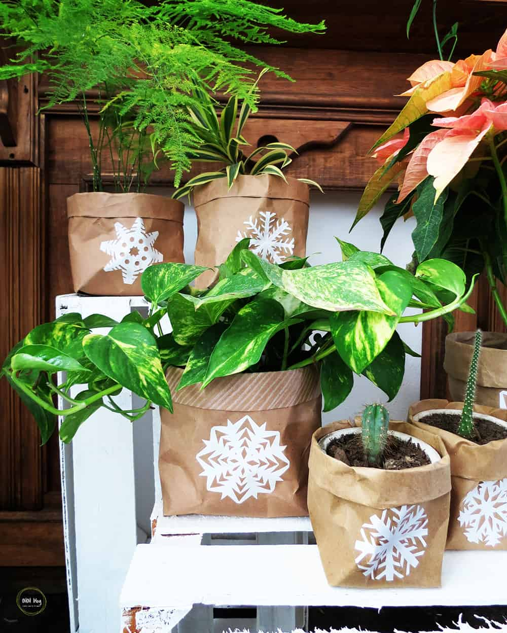 How to dress up your plants for Christmas