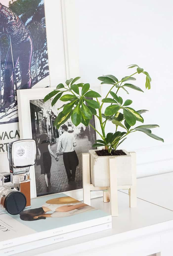 DIY concrete planter with wood stand