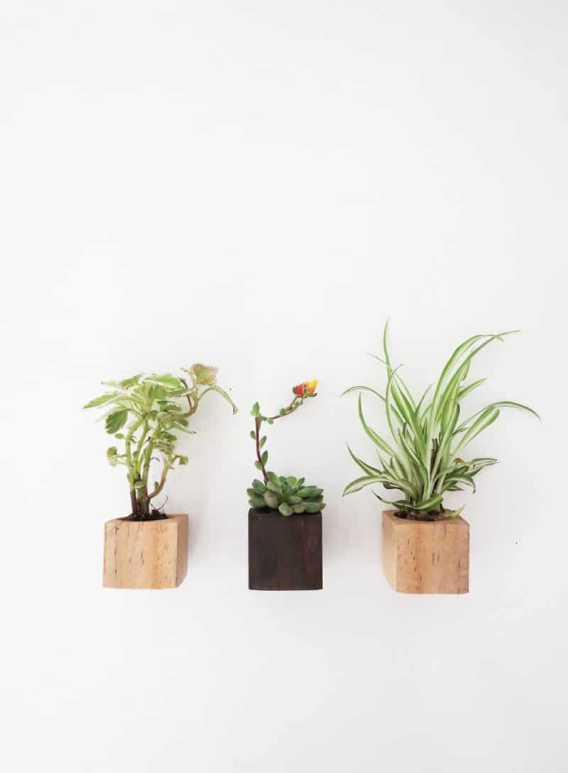 Little magnet planters