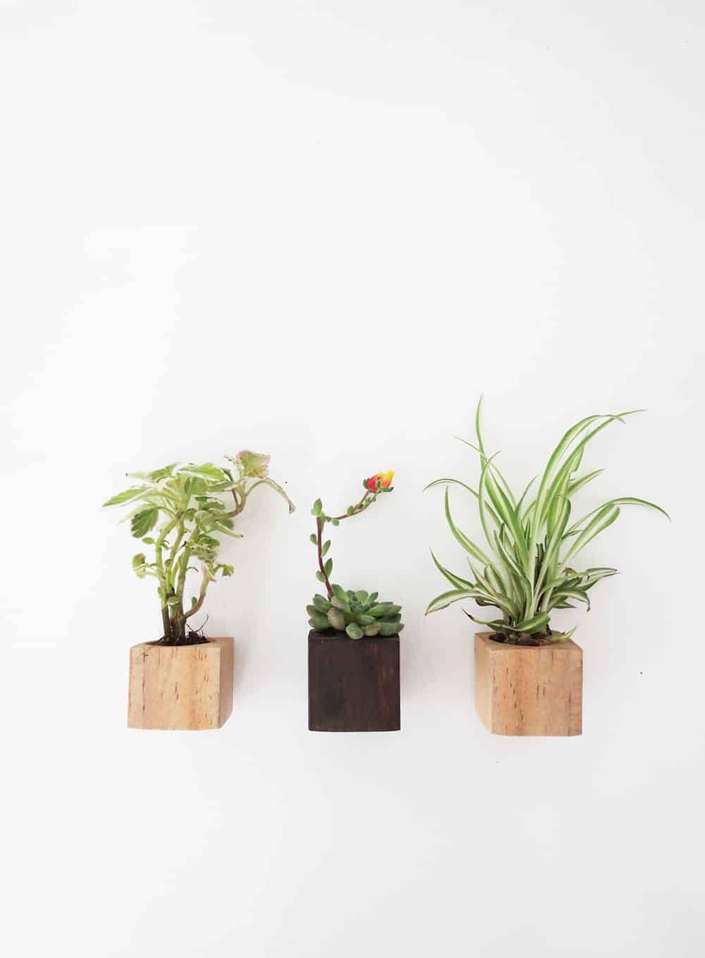 Little magnet planters