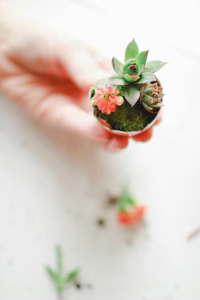 eggshell planter